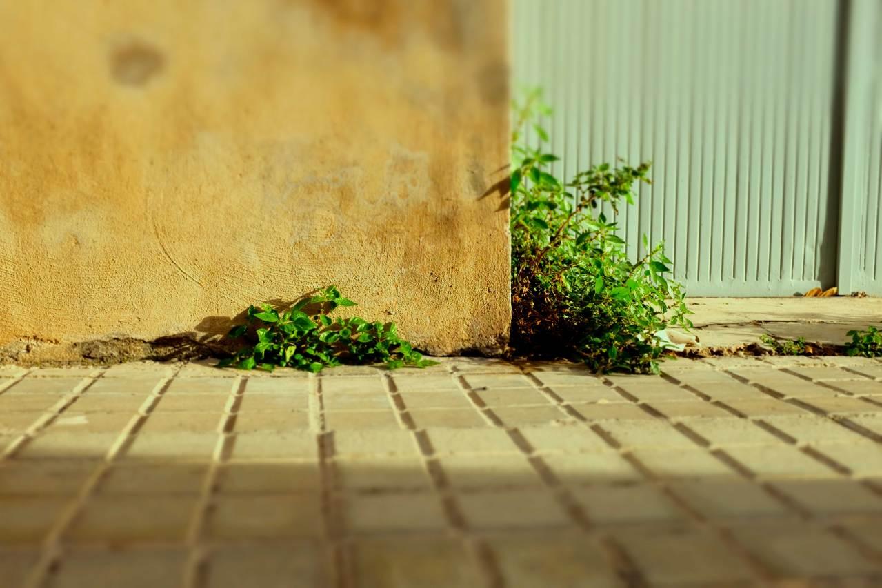 "Proyecto fotográfico ""Mala Hierba"". Baltasar López"